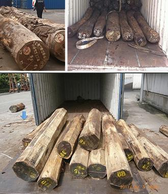 木材进口细分品类现场图